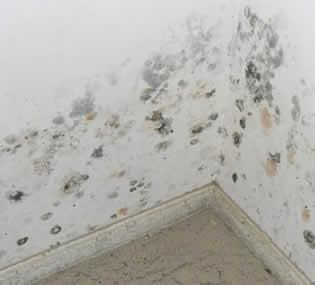 C mo pintar una pared con humedad pinturas lepanto - Como quitar la humedad de una pared ...